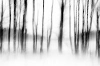 Bewegende bomen