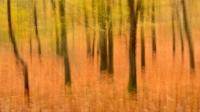 Herfst in beweging