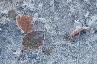 Bladeren in ijs
