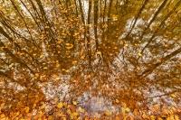 Herfst-spiegeling