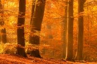 Herfst in het Eversbergbos
