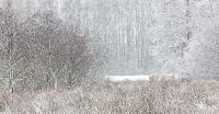 Pony's in de sneeuw in het Reggedal