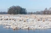 Sneeuwdek