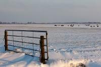 Landhek Friesland